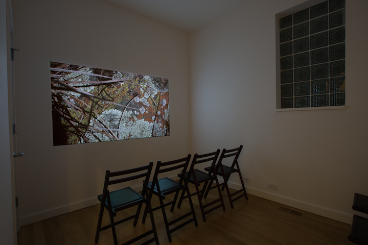 Laurie Palmer, The Lichen Museum, 2015. Installation view, Sector 2337. Photo by Clare Britt.